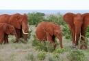 Eléphants du parc Tsavo