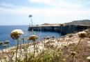 côte maltaise