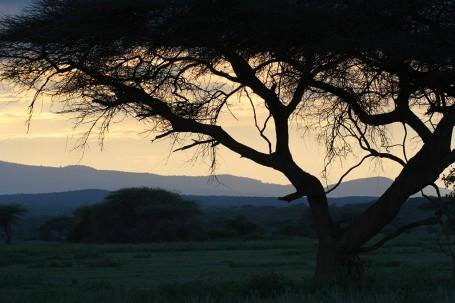 Coucher de soleil sur la savane