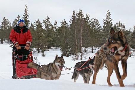 Course en traîneau à Akaslompolo, Laponie