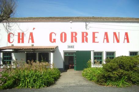 Fabrique de thé à Sao Miguel